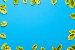 Fresh Leaves on Blue Background Stock Image