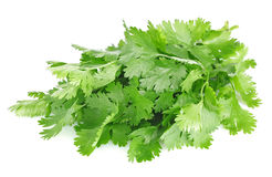 Fresh leaves of cilantro. On white background royalty free stock image