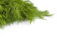 Fresh leaves of fennel Stock Images