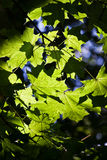 Fresh leaves in forest Stock Image