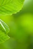 Fresh leaves frame Stock Images