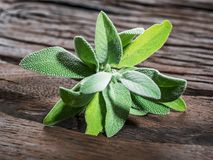 Fresh leaves of garden sage on the wooden background. stock images