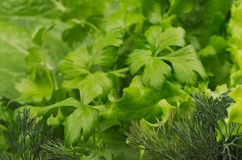 Fresh leaves greens closeup. Fresh leaves greens closeup background Royalty Free Stock Photography