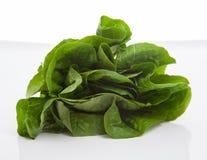 Fresh leaves of lettuce Royalty Free Stock Images