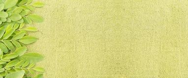 Fresh leaves and moringa powder - Moringa oleifera royalty free stock images