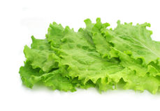 Fresh leaves of salad on white background Royalty Free Stock Photos