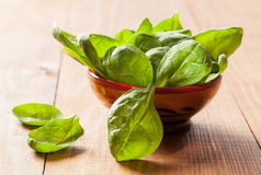 Fresh leaves of spinach Stock Photo