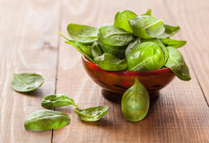 Fresh leaves of spinach Stock Image