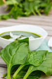 Fresh leaves of spinach Royalty Free Stock Photo