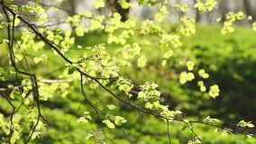 Fresh leaves stock footage