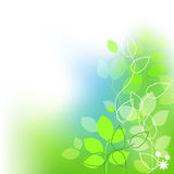 Fresh leaves summer background Stock Image