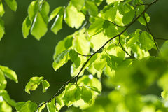 Fresh leaves and sun rays Stock Photos