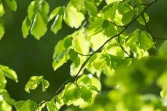 Fresh leaves and sun rays Stock Photos