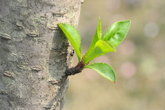 Fresh leaves Stock Photography