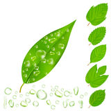 Fresh Leaves With Water Drops Set. Leaves with drops customizable  images set with various editable shapes of drops and leaves vector illustration Stock Photography