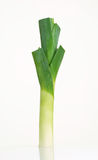 Fresh leek Royalty Free Stock Images