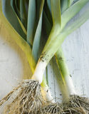 Fresh leeks Stock Photography
