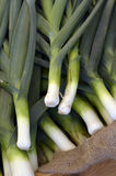 Fresh leeks. Close up picture of freshly picked leeks stock photos