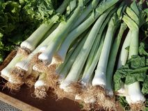 Fresh Leeks Stock Photos