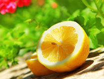 Fresh lemon Royalty Free Stock Photos