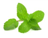 Fresh lemon balm Stock Photos