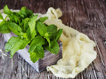 Fresh lemon balm or mint in a small wooden box royalty free stock photos