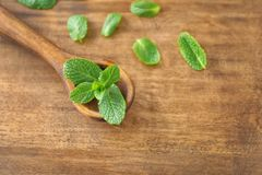 Fresh lemon balm and spoon stock photo