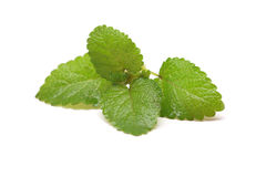 Fresh lemon balm on white Royalty Free Stock Photo