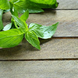 Fresh lemon basil on the table Stock Images