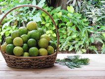 Fresh lemon, Both green and yellow lemon combination in the bask. Et on a wooden table with green nature background royalty free stock images