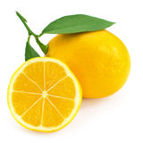 Fresh lemon citrus Stock Images