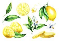 Fresh Lemon compositions set. Watercolor hand drawn illustration. Fresh Lemon compositions set. Watercolor hand drawn illustration Royalty Free Stock Photos