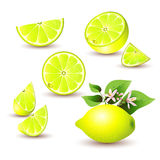 Fresh lemon with flowers Royalty Free Stock Photos