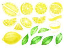 Fresh Lemon fruits whole and sliced. Citrus with leaves isolated on white background. Watercolor hand drawn illustration royalty free illustration