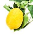 Fresh lemon isolated on white Royalty Free Stock Image
