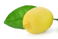 Fresh lemon with leaf. Fresh ripe lemon with dewy leaf royalty free stock photos