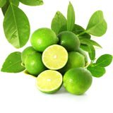 Fresh lemon lime citrus fruit with leaves and cutting in white background Stock Photography
