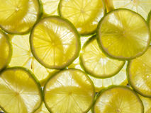 Fresh lemon lime slices. Lit from below Stock Images