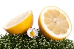 Fresh Lemon On A Green Grass Stock Photo