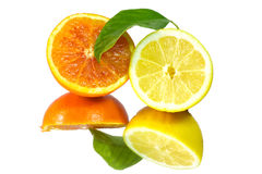 Fresh lemon and orange pulp Stock Photos