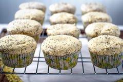 Fresh lemon poppy seed tart muffins Royalty Free Stock Image