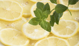 Fresh lemon slices and mint leaves close-up Stock Photography