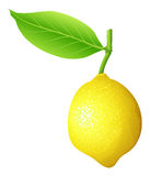 Fresh lemon with stem and leaf Royalty Free Stock Photography