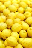Fresh lemon in supermarket Stock Images