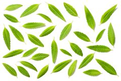Fresh lemon verbena leaves isolated on white, top view. Fresh lemon verbena leaves isolated on white background, top view Royalty Free Stock Images