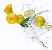 Fresh lemon with water splash Stock Image