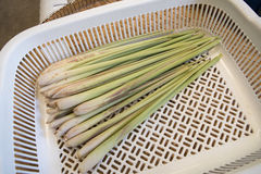 Fresh lemongrass Stock Photography