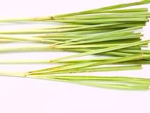 Fresh Lemongrass  on white background Royalty Free Stock Images