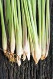 Fresh lemongrass Stock Images