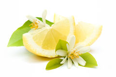 Fresh lemons. With flowers on white ground Royalty Free Stock Photography